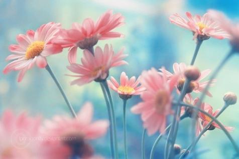 Cuánta belleza hay en la vida...